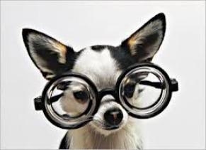 Optichien salon de toilettage pour chiens et chats ransart charleroi hainaut belgique accueil - Salon de toilettage hainaut ...
